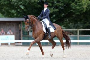 Pferdesport - CD Bremgarten 2013